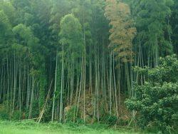竹への取組み